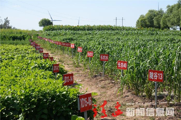 靖边首届七月乡村文化旅游节即将开幕