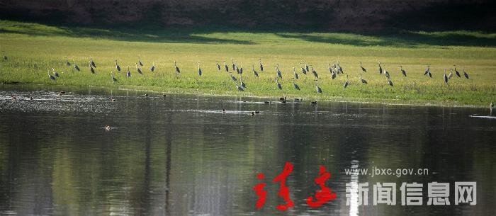 生態蘆河  鳥類天堂