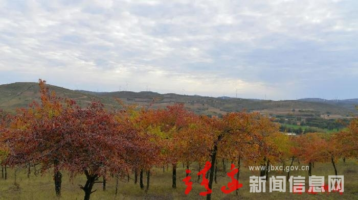 靖边县西涧丹林景色美不胜收